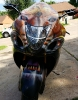 Lion faced hayabusa custom paint